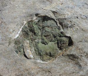 09. Ciottoli di metabasiti (antichi magmi solidificati sull'originario fondo oceanico) inglobati nei sedimenti marini e ricristallizzati.