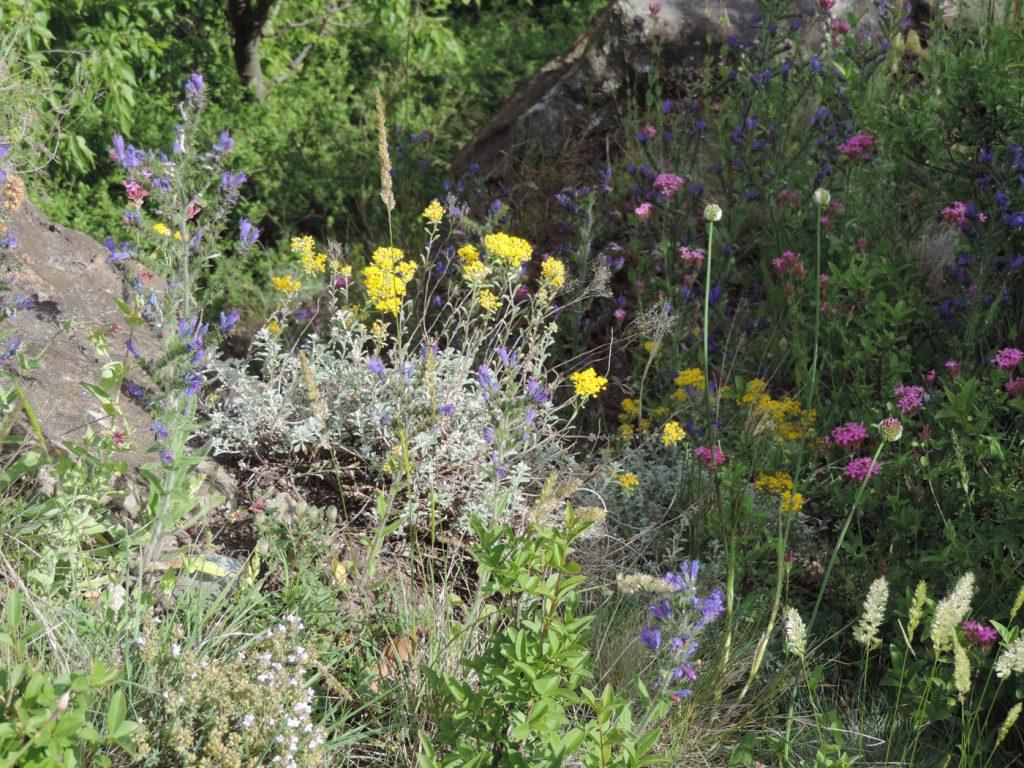 Flora xerica
