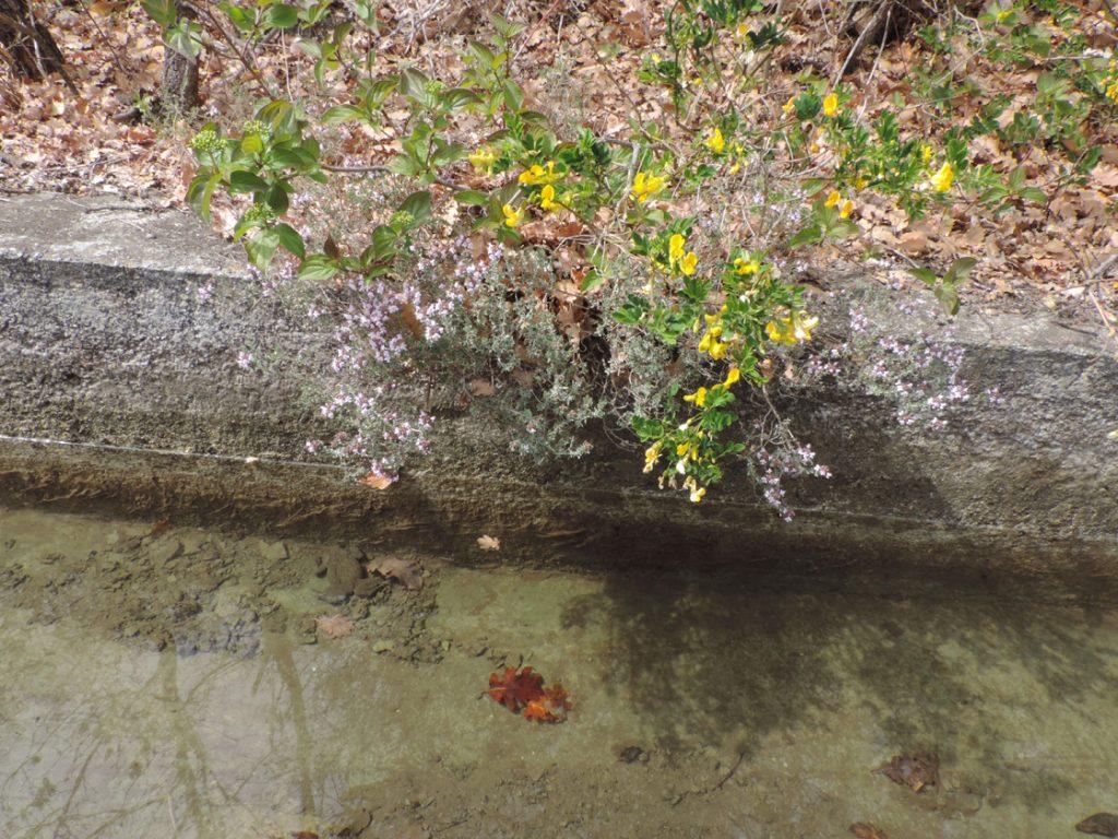 12. A monte del canale invece permangono le condizioni aride tipiche dell'adret della grande valle.