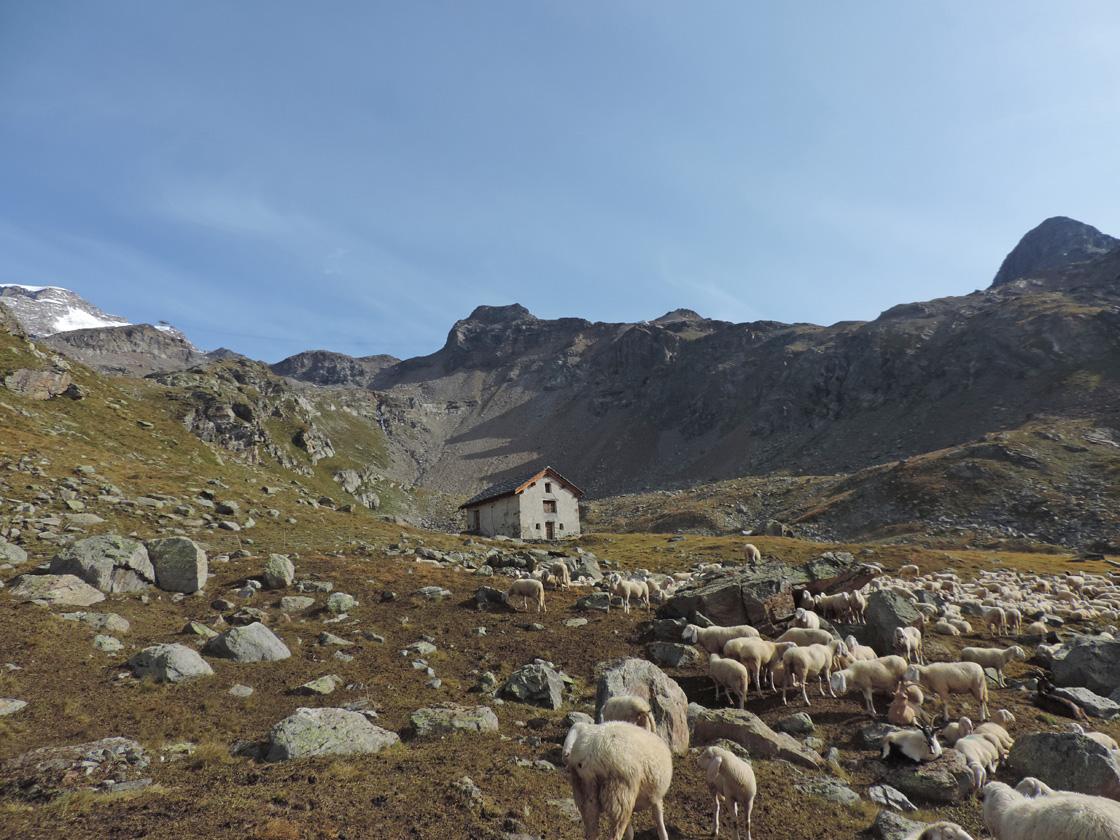 12. L'Alpe Indren (2540 m) con il casotto ristrutturato. Sullo sfondo la montagna dello Stolenberg.