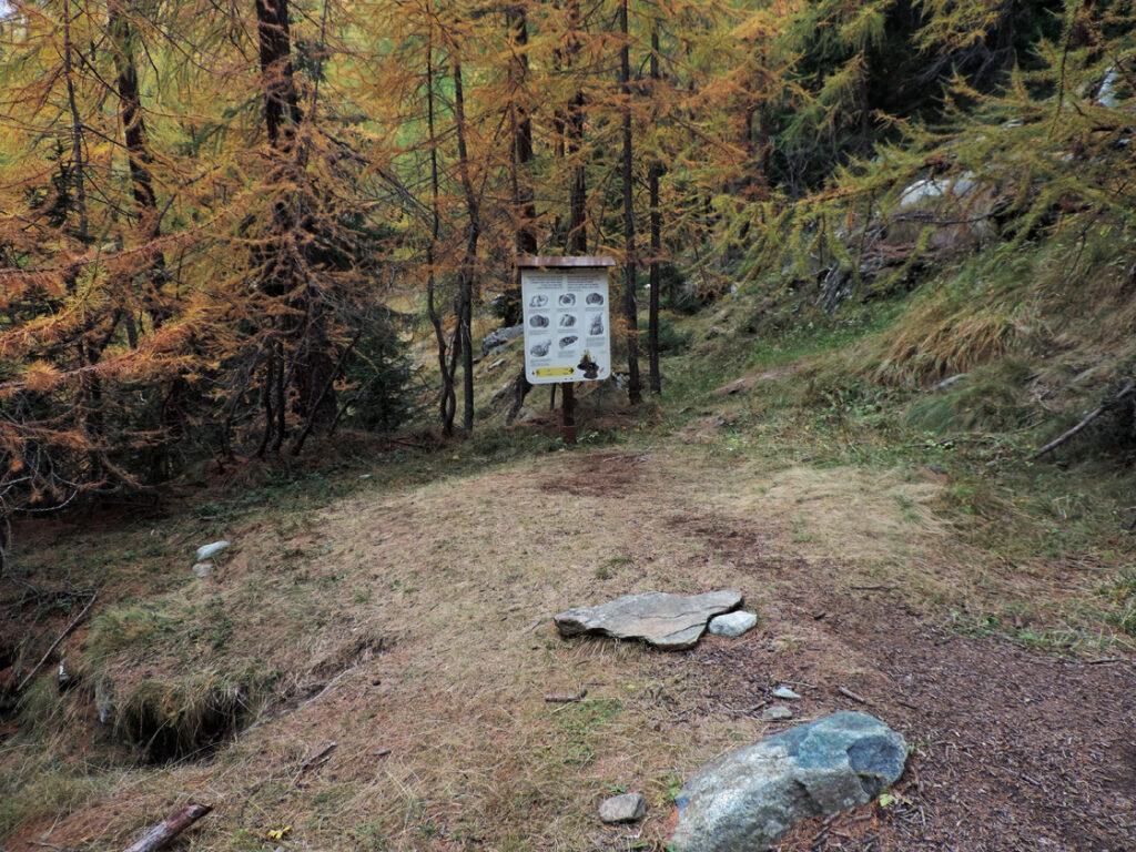 02. La carbonaia, una piazzola nel bosco, con il cartello esplicativo.