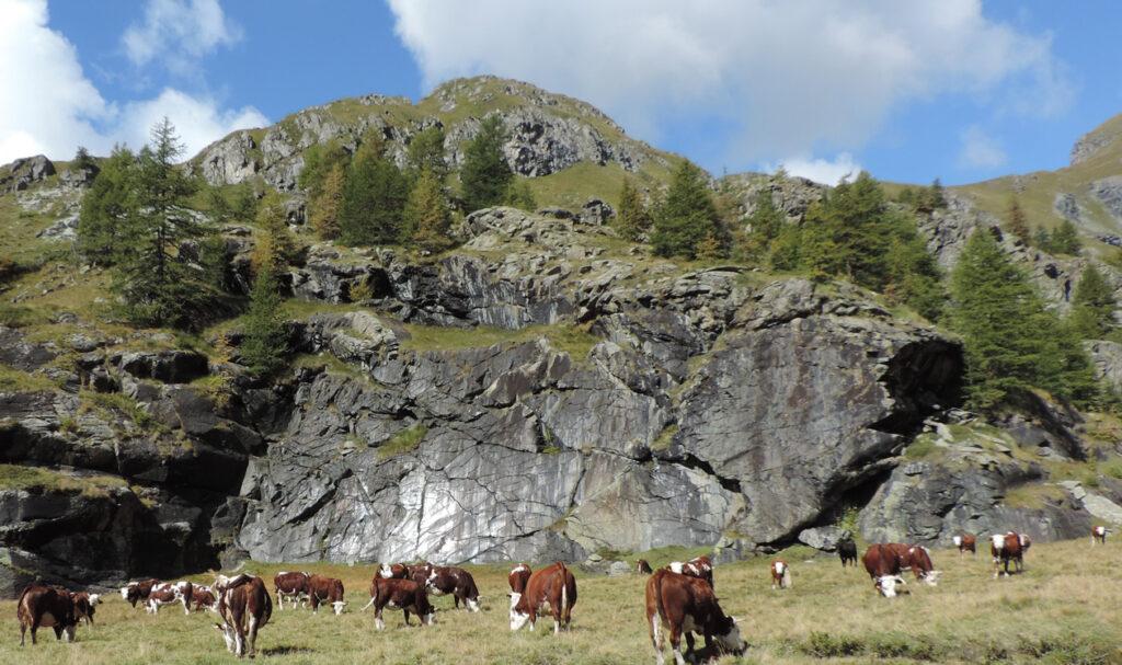 07. Al fondo del Plan de Tsère, questi specchi di faglia testimoniano dello sprofondamento della roccia che ha creato il bacino alluvionale.
