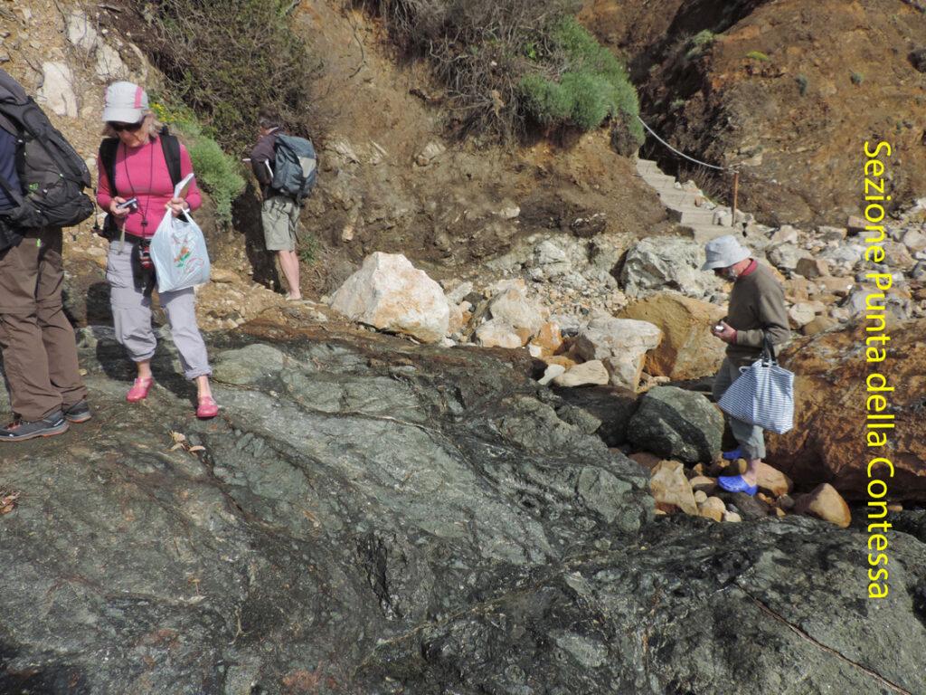 02a. La sezione geologica di Punta della Contessa comprende, dal basso verso l'alto, serpentiniti con rocce magmatiche del fondo oceanico, poi un'intrusione recente di granito di San Martino, quindi la serie delle Argille a Palombini (flysch cretacico inferiore).