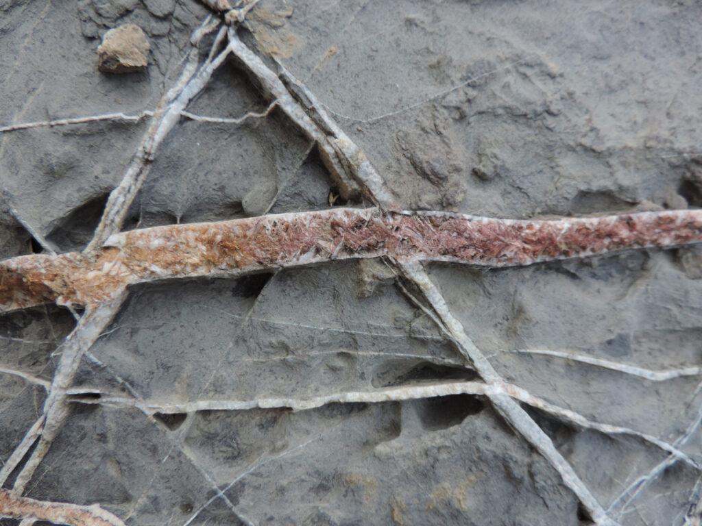 05a. Marina di Campo, appena a sud del porticciolo: sedimentazioni oceaniche calcaree e argillose.