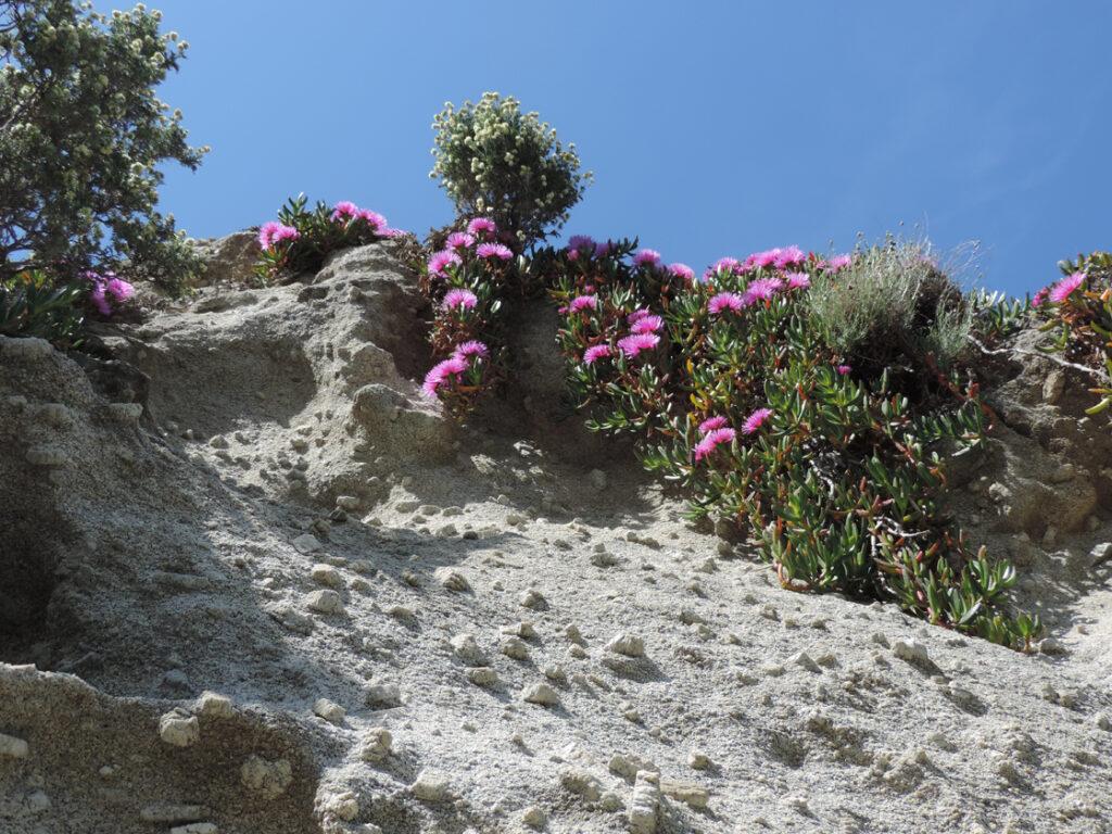 07e. Sovente il feldspato potassico risulta in rilievo sulla superficie avendo maggior resistenza all'erosione.