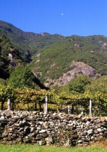 2.Muretto di vigna in fondovalle. Blocchi eterogenei di pietra arrotondati dal trasporto alluvionale. Echallod, Arnad.