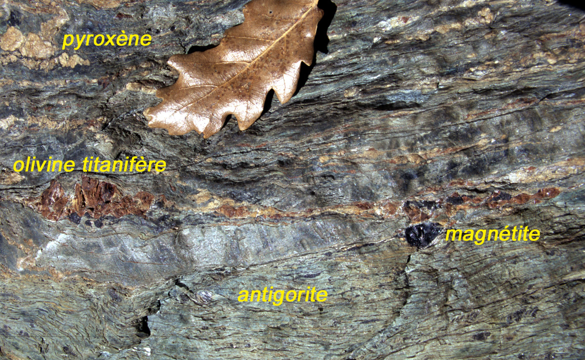 Minerali oceanici nella peridotite serpentinizzata, in particolare antigorite (serpentino) e magnetite, nonché clinopirosseno (bianco) e olivina titanifera (rossa).
