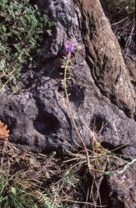 7.Évidences de la remontée finale : filon de chlorite dans les serpentinites. Ici gravé en cupules, signes mystérieux difficiles à dater sans contexte archéologique.