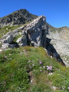 12. Bianchissime rocce calcaree affiorano a lastroni sul crinale verso Perloz, circondate da stelle alpine e astri violetti.