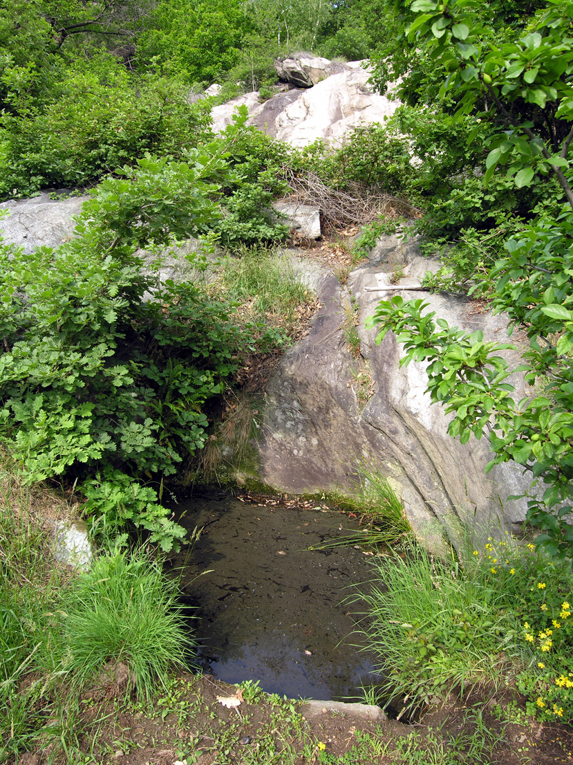16. Sul bordo delle vigne di Donnas, in un giardino al margine del bosco, ammiriamo questa marmitta per pesci rossi.