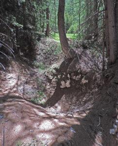 12. Altra serie di piccole doline nel bosco con affioramento di gessi.