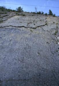 2. Fossili alpini. La Dalle aux Ammonites nella Riserva Geologica dell'Alta Provenza.