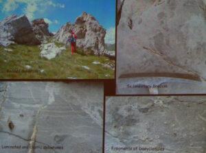 3. Microfossili valdostani: foraminiferi nelle dolomie del Gran Pays (Quart AO). Da Ciarapica et al., 2013