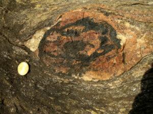 Un altro nodulo mineralizzato ad avvolgimento. La monetina è da 10 cent.
