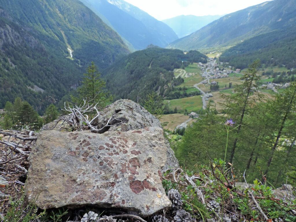 Sia in affioramento che in detrito ogni tanto fanno capolino bei granati ante-alpini che vivacizzano la roccia.