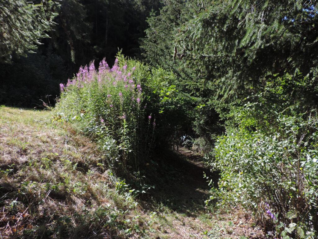 L'imbocco di uno dei sentieri di visita alle miniere.