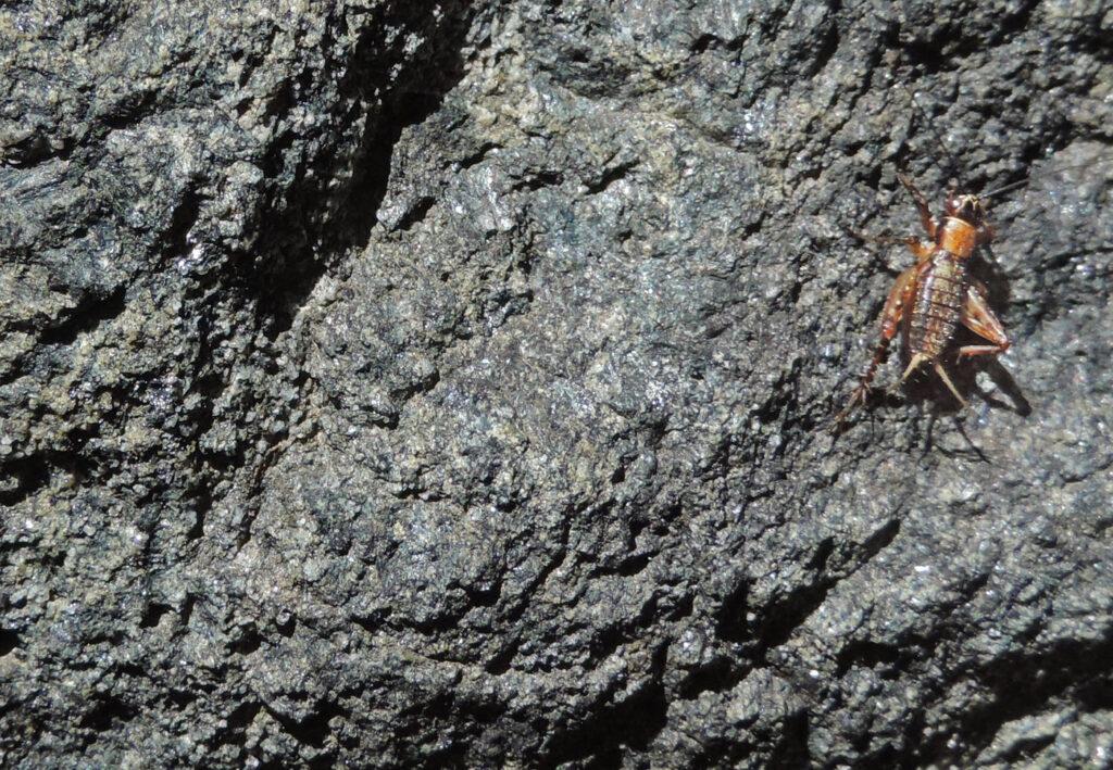 Ecco in dettaglio la glaucofanite (roccia ad anfibolo derivante da magmi basaltici) che costituisce il sostegno della balconata di Gouaz.
